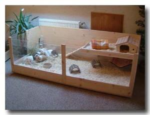 meerschweinchenallee haltung. Black Bedroom Furniture Sets. Home Design Ideas